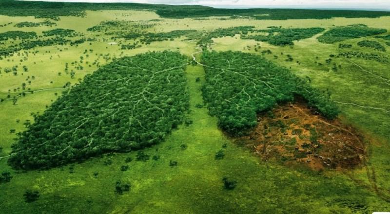 Keindahan Alam Hutan Hujan Amazon, si Paru-paru Dunia